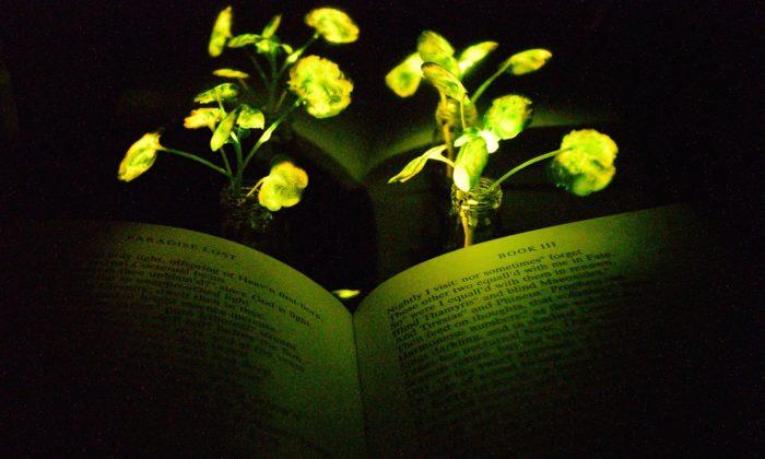 Velká výstava Nature ukazuje přírodou inspirované objevy včetně svítících květin