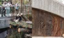 Panda House od BIG v kodaňské zoo