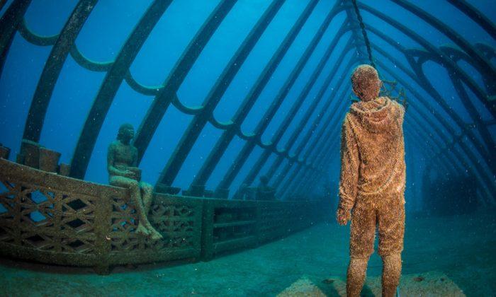 U australských břehů vyrostlo podmořské muzeum skorálovým skleníkem asochami