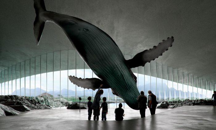 Krom pozorování živých velryb nabídne vyhlídka vNorsku isochu létajícího keporkaka