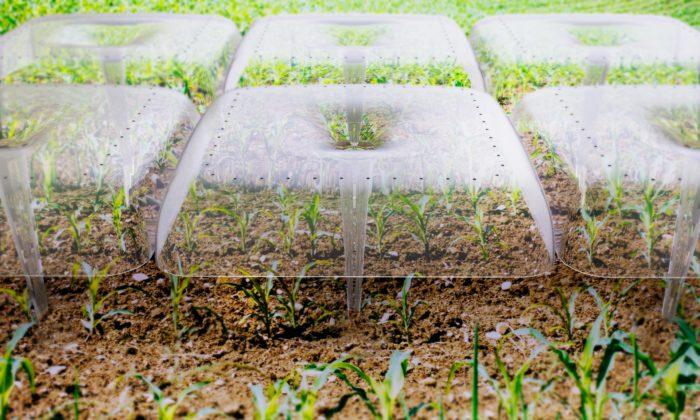 Agrodome jepomůcka pro pěstování rostlin vyrobená zrecyklovaných PET láhví