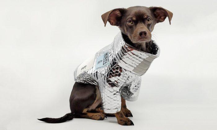 Designér přetvořil jednorázový potravinový obal naobleček pro psa