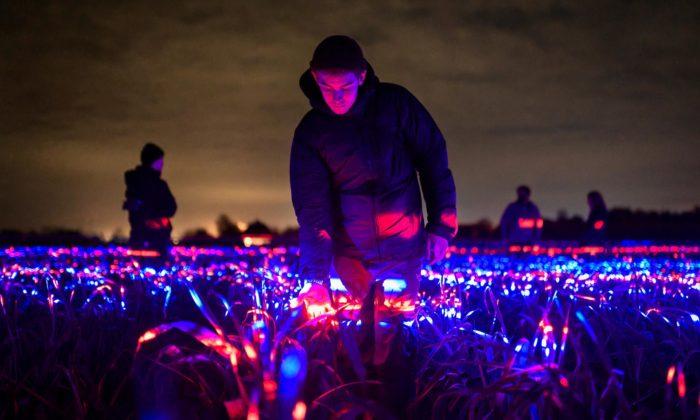 Světelná instalace Grow ukazuje světlo jako pomocníka rostlinám vrůstu aodolnosti