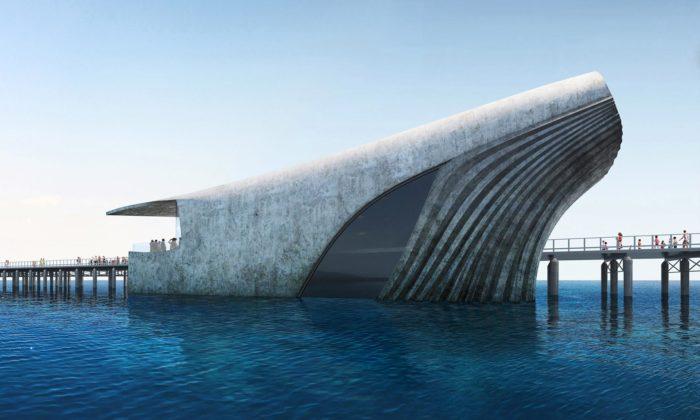 V Austrálii vznikne podmořské návštěvnické centrum stvarem vynořující sevelryby
