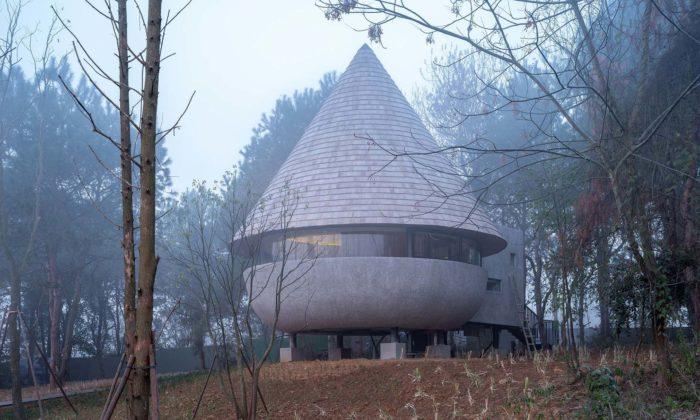 Na okraji borovicového lesa vyrostl malý domek The Mushroom