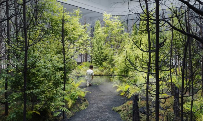 Ve vídeňské galerii vystavili 400 částečně spálených stromů jako pohled dobudoucnosti