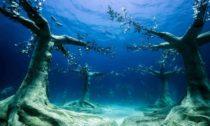 Jason deCaires Taylor ajeho podmořský les naKypru