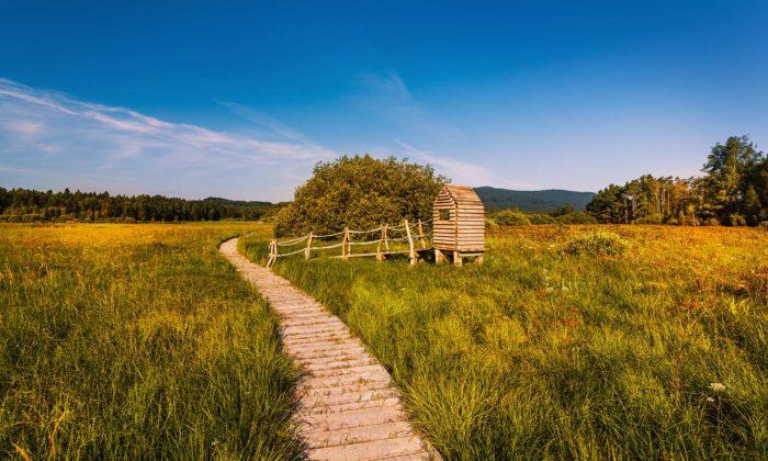 U obce Polná naŠumavě vznikla naučná stezka okolo rybníku Olšina