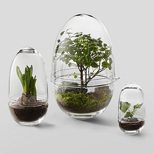 Stolní skleněné mini skleníky Grow